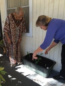 Volunteer and garden master, Kitty, checks in with 4 garden Earthbox Initiative pilot program recipients on the Meals On Wheels of Tampa program each month.